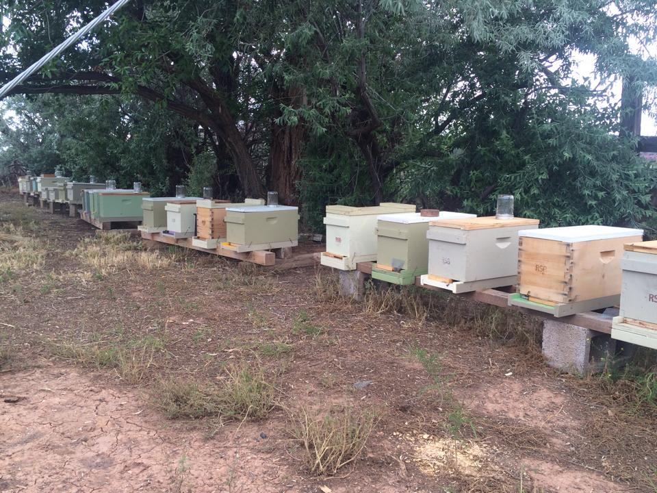 nucs in a row